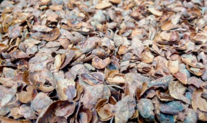 Cocoa Shells for home gardening